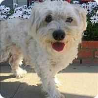 Adopt A Pet :: Bebe - Encino, CA