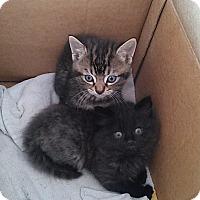 Adopt A Pet :: Litter 5 - Daleville, AL