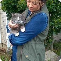 Adopt A Pet :: Scully - Yuba City, CA