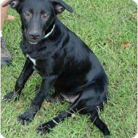 Adopt A Pet :: Tilly - Adamsville, TN