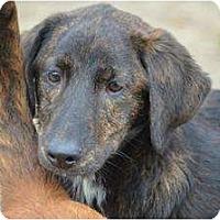 Adopt A Pet :: Madison - New Boston, NH