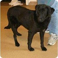 Adopt A Pet :: Abby - Toronto/Etobicoke/GTA, ON