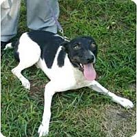 Adopt A Pet :: Barrett - Carmel, IN