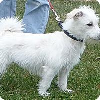 Adopt A Pet :: MARNIE - GARRETT, IN
