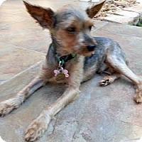 Adopt A Pet :: Sailor - Palm Coast, FL