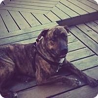 Adopt A Pet :: Jaeger - Chewelah, WA