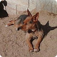 Adopt A Pet :: Chelsea the LoveBug - Phoenix, AZ
