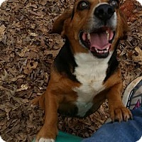 Adopt A Pet :: Daisy - Freeport, ME