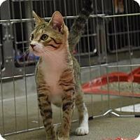 Adopt A Pet :: Christabella - Canastota, NY
