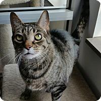 Adopt A Pet :: Francis - Chambersburg, PA