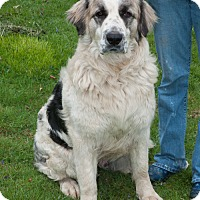 Adopt A Pet :: Keith - New Martinsville, WV