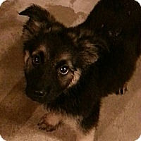 Adopt A Pet :: George**ADOPTED!** - Chicago, IL