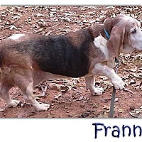Adopt A Pet :: Frannie - Marietta, GA