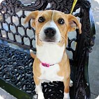 Adopt A Pet :: Jubilee - Austin, TX