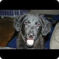 Adopt A Pet :: Travis - Morgantown, WV