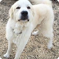 Adopt A Pet :: Ricky ADOPTION PENDING - Bloomington, IL