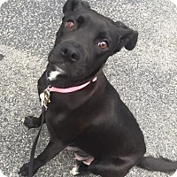 Adopt A Pet :: Gabby - Wappingers, NY