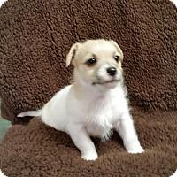 Adopt A Pet :: Kiki - Minneapolis, MN