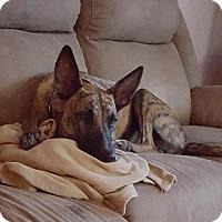 Adopt A Pet :: Echo (Jesse's Chance) - Tucson, AZ