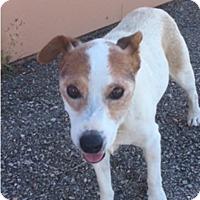 Adopt A Pet :: Sam in Abilene - Austin, TX