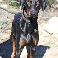 Adopt A Pet :: Raven - Fillmore, CA