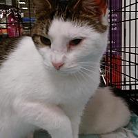 Adopt A Pet :: Tabitha - Columbus, OH