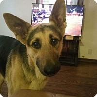 Adopt A Pet :: MAVERICK TH - Tampa, FL