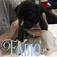 Adopt A Pet :: Fabio - Cheney, KS