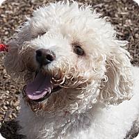 Adopt A Pet :: Jacque - Burlingame, CA