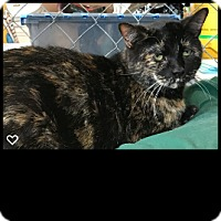 Adopt A Pet :: Ginger - Fallbrook, CA