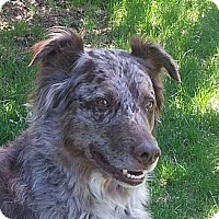 Adopt A Pet :: Mike - Rigaud, QC