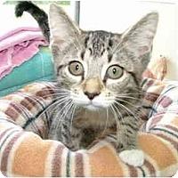 Adopt A Pet :: Gabe - Winter Haven, FL