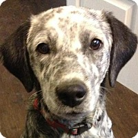 Adopt A Pet :: Durkee - Brattleboro, VT