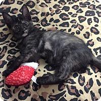 Adopt A Pet :: Sheena - Scottsdale, AZ