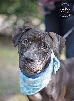 Boxer Mix Dog for adoption in Kingwood, Texas - Fernando