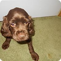 Adopt A Pet :: Chip -Adopted! - Kannapolis, NC