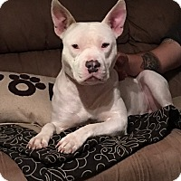 Adopt A Pet :: Legend - Phoenix, AZ
