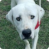 Adopt A Pet :: Barkley 💚 DOB 6/27/15! - Saratoga Springs, NY