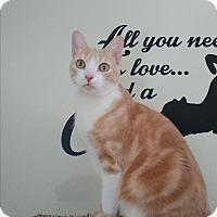 Adopt A Pet :: Oscar - Umatilla, FL