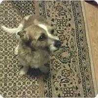 Adopt A Pet :: Tito in Houston - Houston, TX