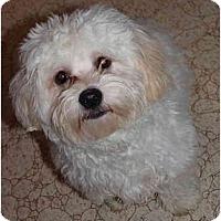 Adopt A Pet :: Koby - Toronto/Etobicoke/GTA, ON