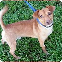 Adopt A Pet :: Stewie - Williston, FL