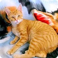 Adopt A Pet :: Gertie - Edmonton, AB