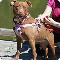 Adopt A Pet :: Cassidy - Snellville, GA