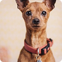 Adopt A Pet :: Butch - Portland, OR