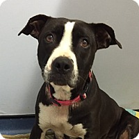 Adopt A Pet :: Tulip - Jupiter, FL