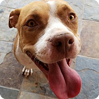 Adopt A Pet :: BAILEY - Peoria, AZ