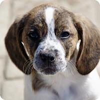 Adopt A Pet :: Cindy - Mechanicsburg, PA