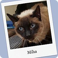 Adopt A Pet :: Miha - Tombstone, AZ