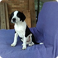 Adopt A Pet :: Jeremy in CT - Manchester, CT
